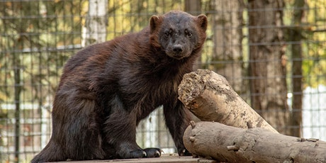 Alaska Zoo Admissions: May 27, 2020 from 10:00am - 1:30pm tickets