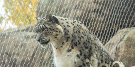 Alaska Zoo Admissions: May 29, 2020 from 10:00am - 1:30pm tickets