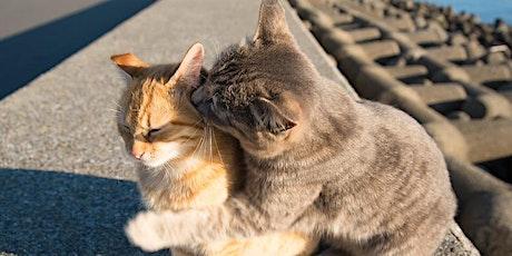 """WEBINAR: Lezing """"Meer-kats-huishoudens"""" tickets"""