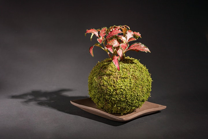 Online Kokedama (sustainable moss garden) class. We'll post you the kit! image
