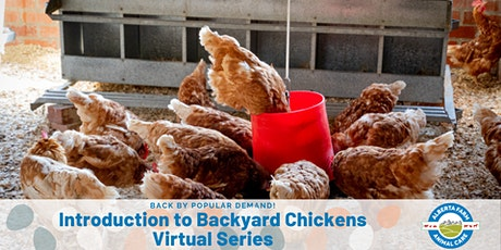 Introduction to Backyard Chickens  - Virtual Series tickets