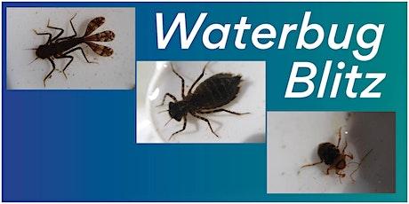 Water Bug Blitz tickets