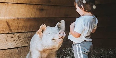 Virtual Animal Sanctuary Tour for classrooms tickets