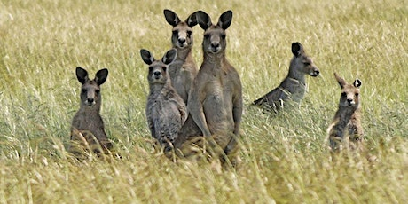Kangaroo Afternoon tickets