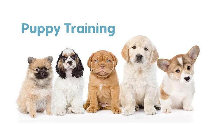 PUPPY TRAINING (LEVEL 1) Saturday, St Catherine's Park, Lucan image