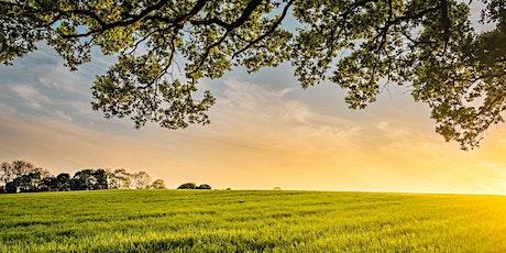 Las Ecoaldeas como alternativa. 2ª Parte entradas