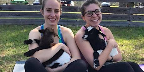 Baby Goat Snugglefest: Meet & Greet tickets