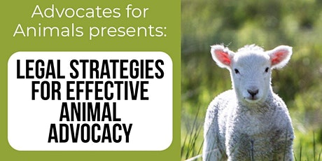 Legal Strategies for Effective Animal Advocacy tickets