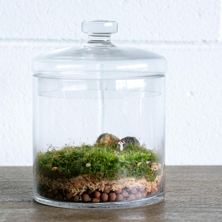 Terrarium Workshop image