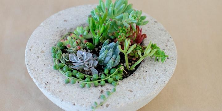 Concrete Pot Workshops + Succulent Care image