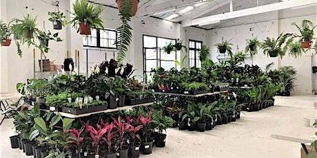 Sydney Virtual Pop-up shop - Huge Indoor Plant Sale tickets