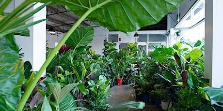 Perth Virtual Pop-up shop - Huge Indoor Plant Sale tickets