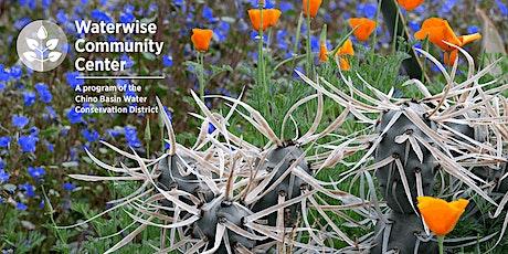 Rainwater Harvesting for Home Landscapes Online Workshop tickets