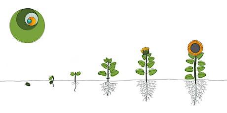 """Renaciendo Te """"Cultivando la semilla genuina"""" entradas"""