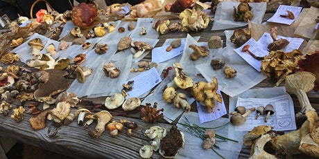 Mushroom Foraging at the Santa Fe Ski Basin with the NM Mycological Society tickets