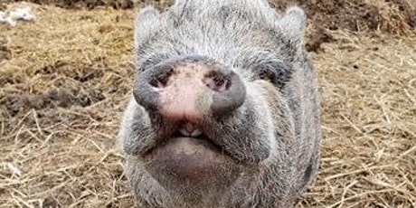 Jenkins Forever Farm Facebook Live Auction Fundraiser tickets