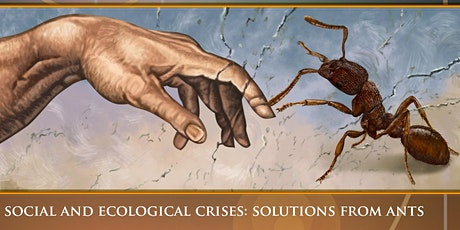 Social and Ecological Crises: Solutions From Ants billets