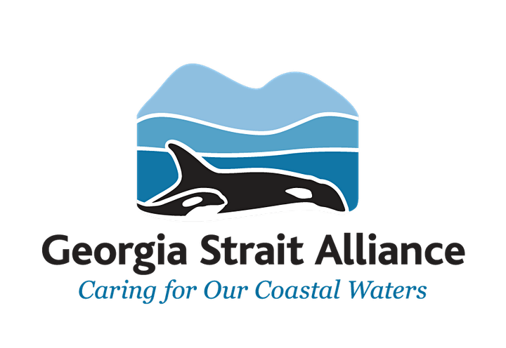 Orca Protection for Boaters: How to Minimize Your Impact in 2021 image