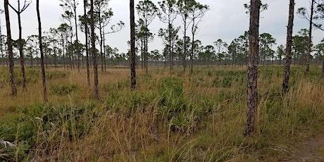 Uplands Ecology: a Florida Master Naturalist preview (webinar) billets