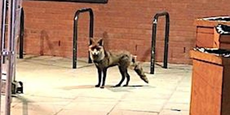 A Skulk of Foxes - soundwalk - towards a watery commons Tickets