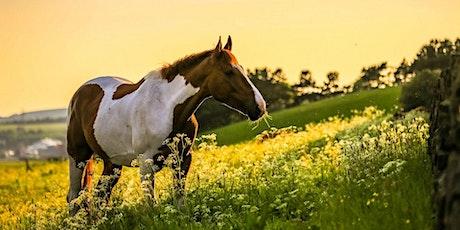 Forum Pferdegesundheit für Therapeuten im August Tickets