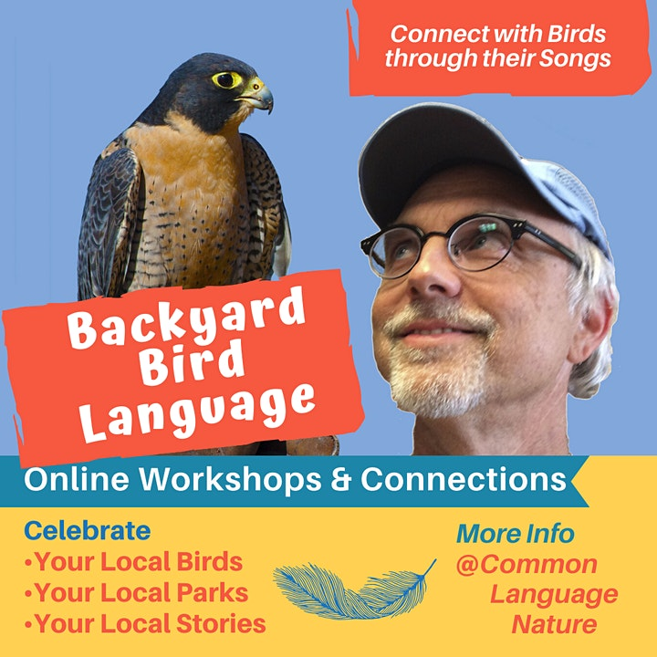 Backyard Bird Language:  Protecting  & Connecting with our Birds image