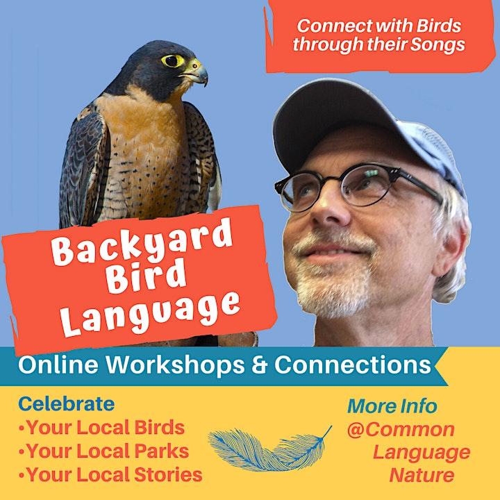 Backyard Bird Language: 4-Week LIVE Online Learning & Mentoring Course image