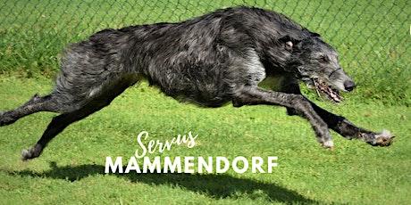 Training Windhund-Rennsport Tickets