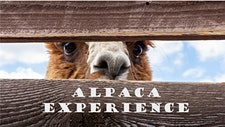 Alpacaexperience.nl logo