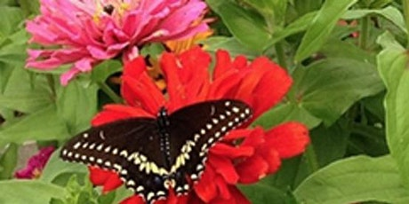 Pollinator Gardens, Presented by Cornell Cooperative Extension tickets