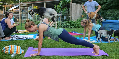 Goat Yoga In The Woods For Everyone tickets