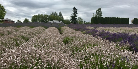 Full Bloom Lavender Farm Public Hours tickets