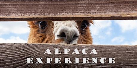 Alpaca Wandeling tickets
