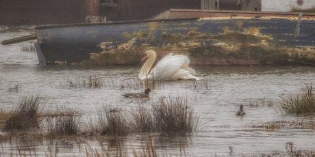 Landscape & Wild Life Photography Workshop - Hoo Marshes, Kent tickets
