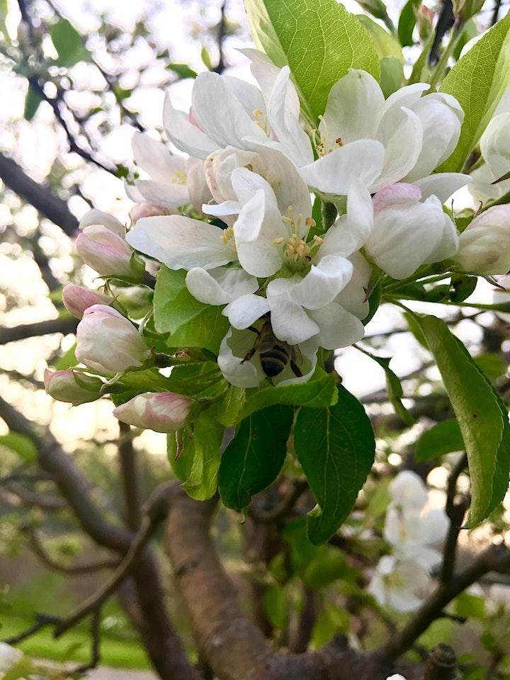 Orchard Tour image