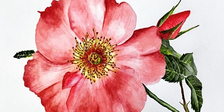 Draw and Paint Realistic Botanicals from Photographs in Watercolor tickets