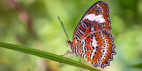 Macro Photography, Advanced Techniques – Bribie Butterfly House tickets