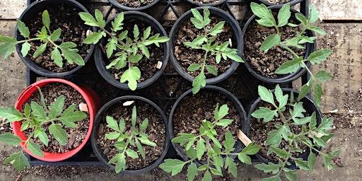 Organic Gardening Basics: Propagation & Planting