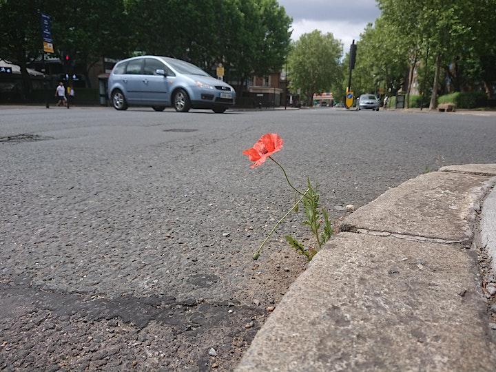 Pavement Plants image