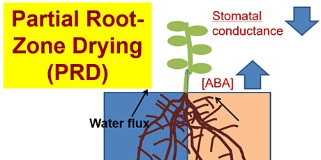 Partial rootzone drying: from laboratory to commercial practice ? tickets