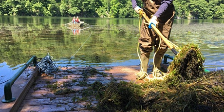 Invasive Plant Removal in Wampus Pond tickets