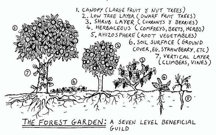 Afbeelding van The 7-layered Permaculture Garden