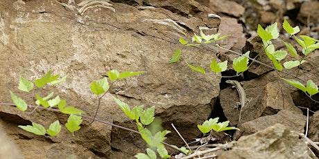 Sortie nature: sur la piste des reptiles. tickets