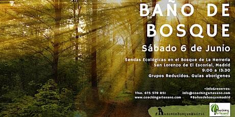 Baño de Bosque sábado 6 Junio - Bosques de El Escorial entradas