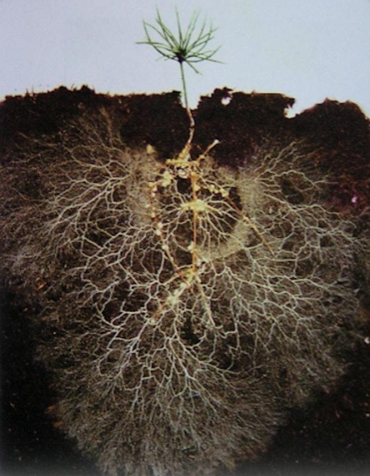 Desert Southwest Soil Health Webinar image