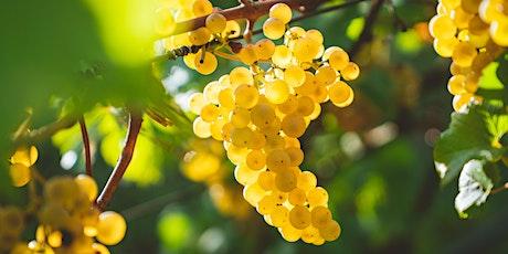 Virtual Wine Class: Desperately Seeking Chardonnay tickets