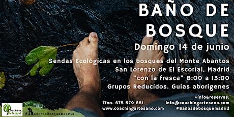 Baño de Bosque Domingo 14 jun. Bosques del monte Abantos del buen oso entradas