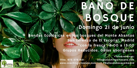 Baño de Bosque Domingo 21 jun. Bosques del monte Abantos del buen oso entradas