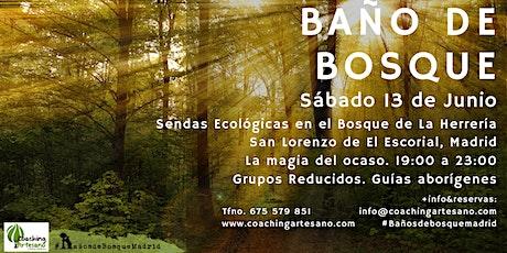 Baño de Bosque sáb. 13 Jun - Ocaso Bosque La Herrería El Escorial entradas