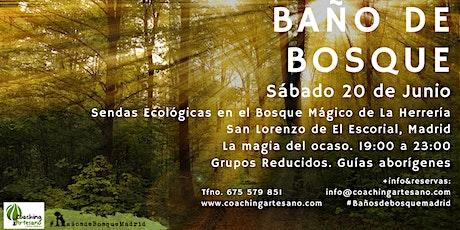 Baño de Bosque sáb. 20 Jun - Ocaso Bosque La Herrería El Escorial entradas